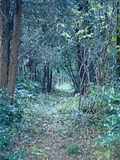 bosque0002.jpg